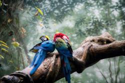 loros en la jungla