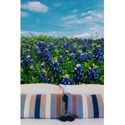 Flores azules aciano