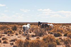 caballos en la naturaleza